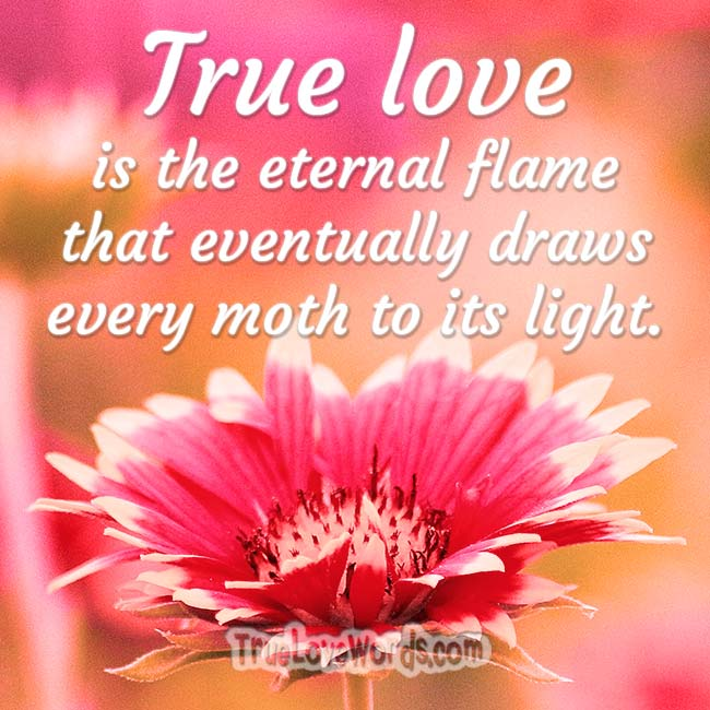 true love quotes - the eternal flame that eventually draws every moth to its light.
