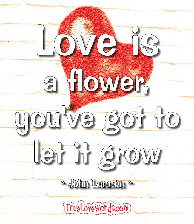 Love is a flower, you've got to let it grow