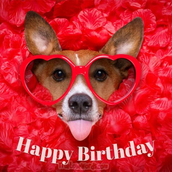 Funny Dog Wishing Happy Birthday